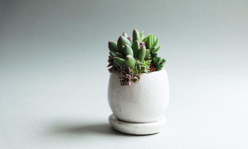 TOKIIRO WORKSHOP-Succulents learned from seasonal colors 1