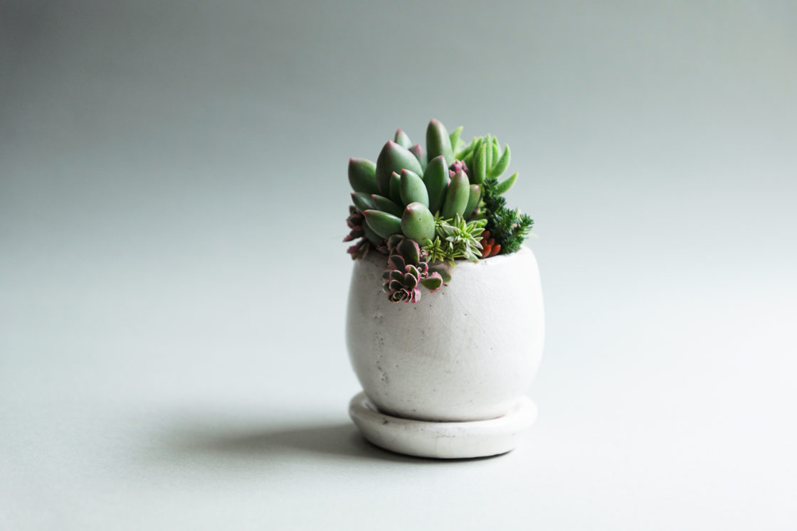 Official Tokiiro Workshop Succulents Learned From The Season